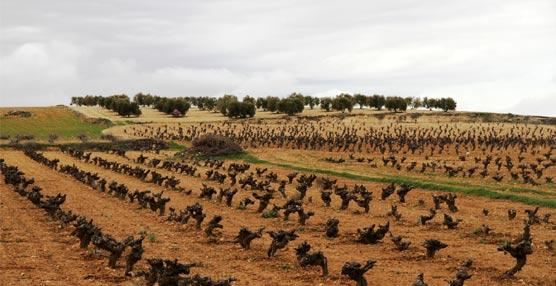 Accor inaugura su primer proyecto de reforestación en España con el 50% de los ahorros generados en lavandería