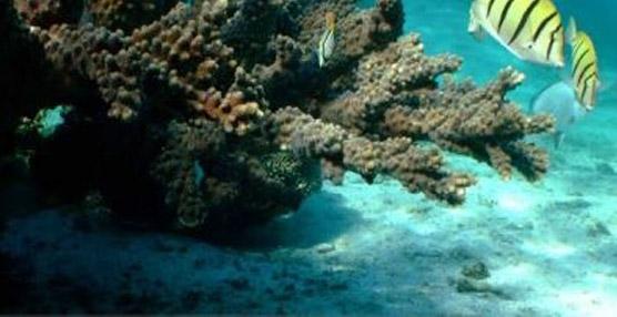 ITH y la Iniciativa de Turismo del Arrecife MesoAmericano intercambian experiencias en turismo sostenible