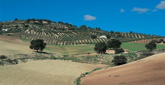 Andalucía presenta su oferta como destino de naturaleza en un encuentro de turismo ornitológico de Reino Unido