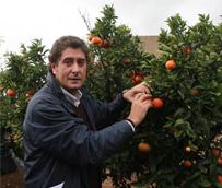 Hoteles de Castellón reparten 2.200 bolsas con dos piezas de mandarinas para el consumo en Nochevieja