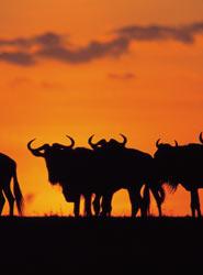 Club Marco Polo y Viajes Azul Marino organizan una gira por varias ciudades para mostrar los atractivos de África