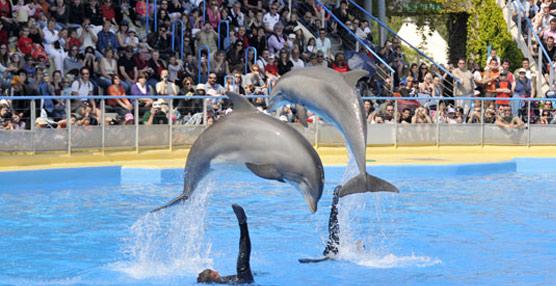 Parques Reunidos invertirá 30 millones de euros para reforzar Marineland, el parque marino más grande de Europa