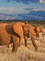 Los turistas que visiten Kenia deberán obtener un visado electrónico antes de efectuar el viaje