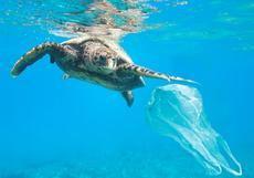 Paradores y Oceanogràfic lanzan una campaña