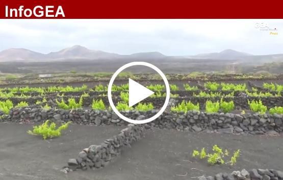 GEA Travel Media: Cata de vino en Lanzarote