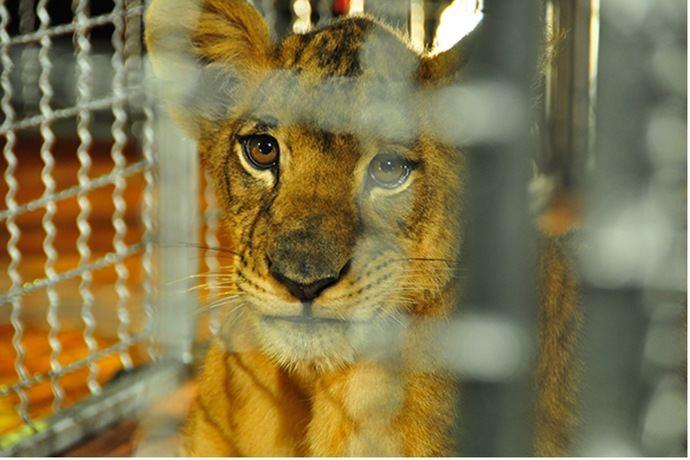 WTTC: el Sector turístico debe ayudar a prevenir el comercio ilegal de vida silvestre