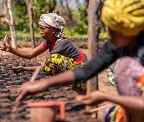 Los clientes de BizAway contribuyen a reducir CO2 con la plantación de árboles