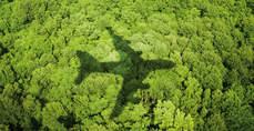 La sostenibilidad es más importante que el factor precio