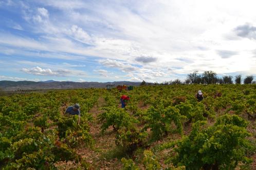 Monasterio de Piedra promueve el Turismo del vino