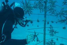 Grupo Iberostar celebra el 'Día de los Oceanos'