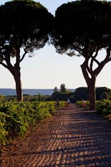 El Abadía Retuerta LeDomaine se une a la red 'Virtuoso'