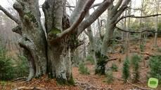 El Dolce Sitges sigue protegiendo bosques