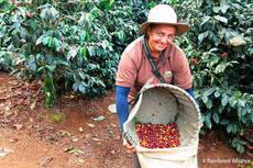 Riu introduce en sus hoteles café originado en fincas sostenibles