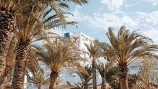 Ushuaïa Ibiza Beach Hotel presenta 'Palmarama'
