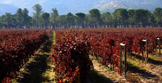 Ribera del Duero: 'Cada vez se está apostando más por el Sector MICE'
