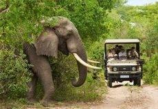 Sudáfrica apuesta por el Turismo familiar