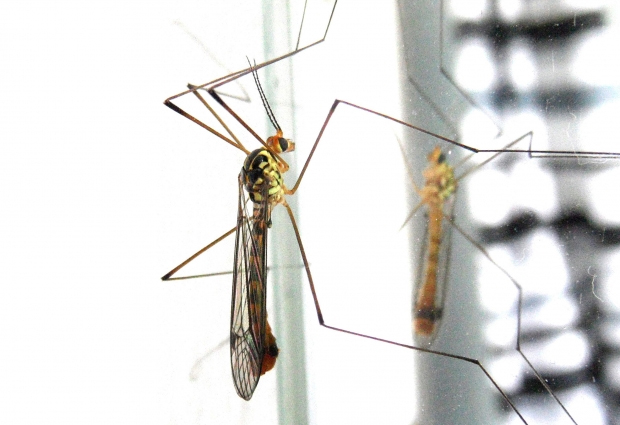 InterMundial ofrece protección ante el virus Zika