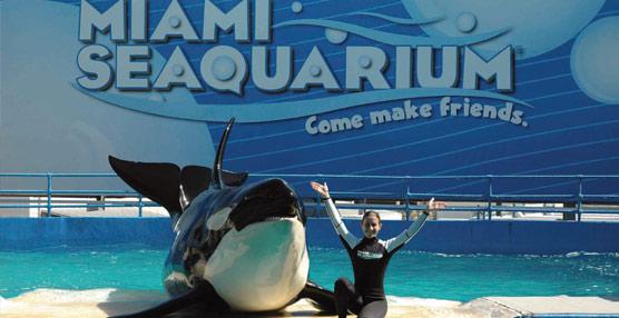 Parques Reunidos adquiere Miami Seaquarium, uno de los mayores parques marinos de Estados Unidos