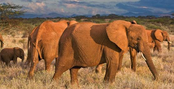 El desarrollo del Turismo en África, seriamente amenazado por la caza furtiva y el comercio ilícito de especies silvestres